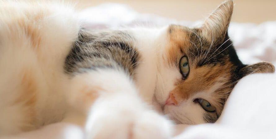 Kot w kawalerce – jak zorganizować mu przestrzeń?