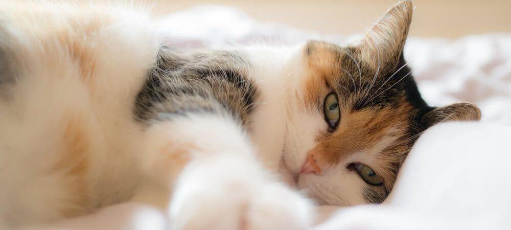 Zdjęcie do artykułu kot w kawalerce