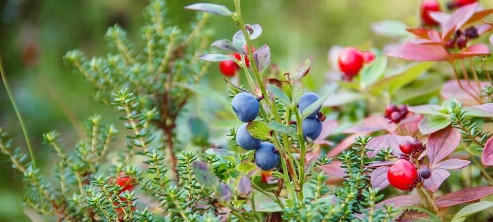 zdjęcie do artykułu krzewy do ogrodu jakie wybrać