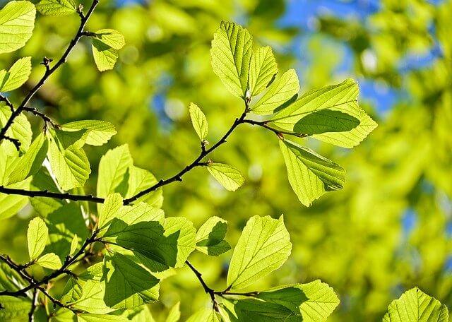 zdjęcie do artykułu drzewa do ogrodu