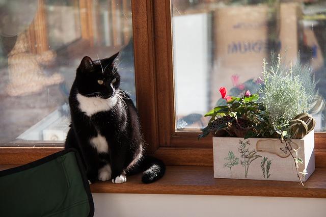 Wynajem mieszkania ze zwierzęciem – co warto wiedzieć?