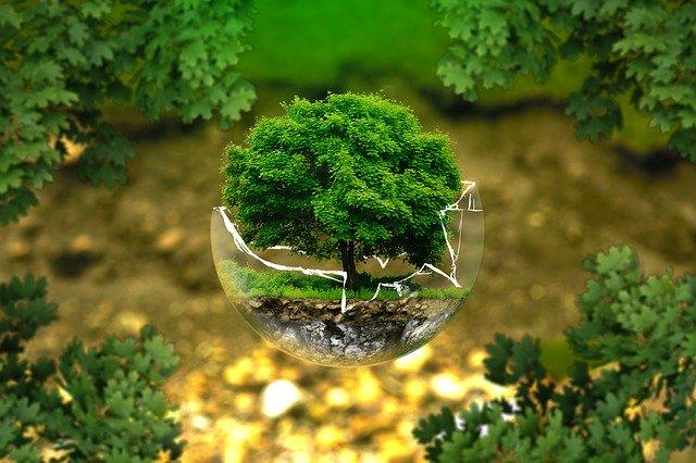 zdjęcie do artykułu Eco Avengers