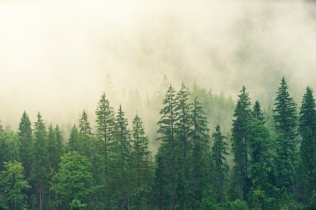 Gdzie na krótką wycieczkę – Krzywy Las, okolice Gryfina