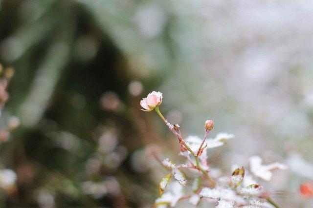 Ciepła zima w ogrodzie – jak dbać o rośliny?