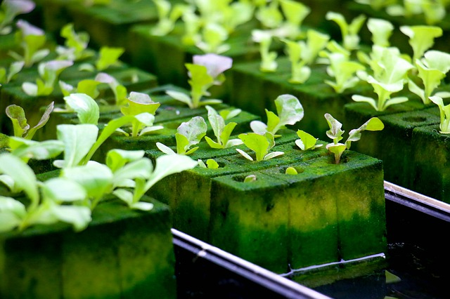Zakładamy ogród hydroponiczny